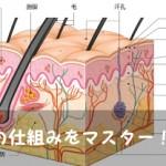 セラミド?ヒアルロン酸? 『肌の仕組み』を知って肌トラブルに備える!